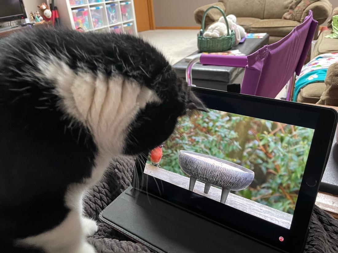 Cat watching bird video on an iPad